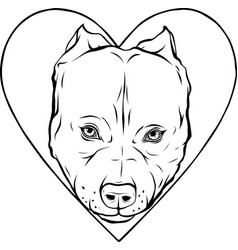 Draw in black and white pitbull head dog in vector