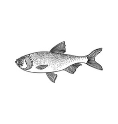 fish sign isolated retro engraved seafood icon vector image