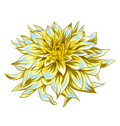 fluffy yellow dahlia vector image