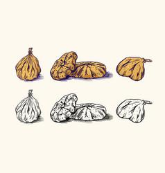fresh fig dried fruit foliage detox spice vector image