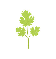 Fresh green watercress leaf vegetarian healthy vector