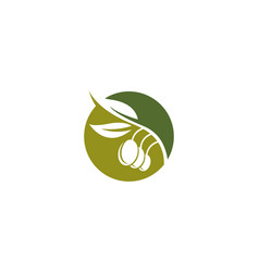 olive logo template icon vector image