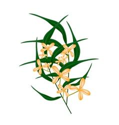 Orange Sweet Osmanthus Flower and Green Leaves vector image