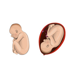 Pregnant womb child vector