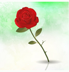 rose floral flower romantic spring background vector image