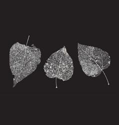 set of white gray skeletons leaves on a black vector image