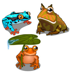 Set of three toads different colors vector