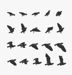 animation dove flying vector image