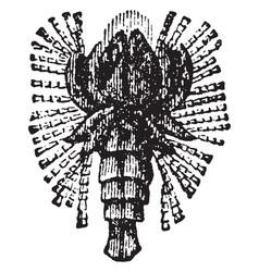Beetle fossil vintage vector