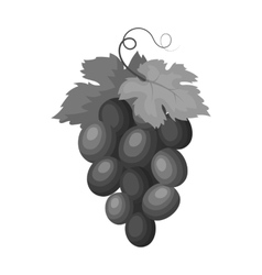 Bunch of wine grapes icon in monochrome style vector