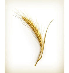 Ear wheat vector