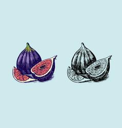 fresh fig fruit foliage detox spice vector image
