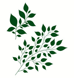 isolated of stylized branches vector image
