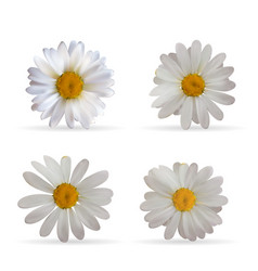 colorful naturalistic beautiful 3d chamomile set vector image vector image