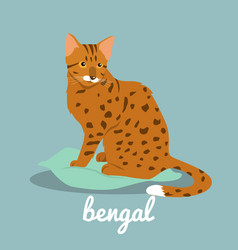 bengal cute cat on sky blue background vector image