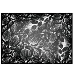 Hand drawn of gardenia erubescens and barringtonia vector