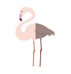 Flamingo exotic bird vector