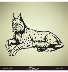 lying lynx vector image
