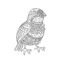 sparrow coloring book vector image
