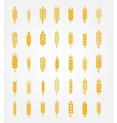 Wheat ears icons set vector