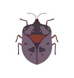 Bug beetle insect species top view vector