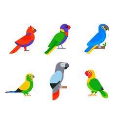 Parrots birds breed species animal nature tropical vector