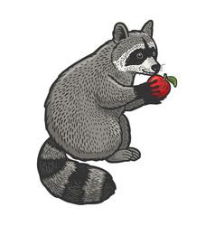 raccoon and apple sketch vector image