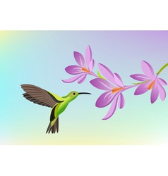 Greeting card with humming-bird vector image vector image