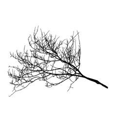 Autumn bare branch tree silhouette vector