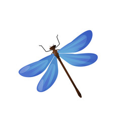 bright blue dragonfly insect isolated on white vector image