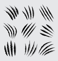 claw scratches and marks animal paws vector image