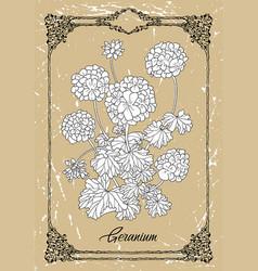 drawing geranium vector image