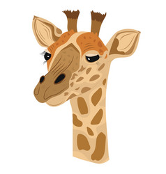 giraffe isolated white background vector image