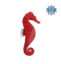 sea horse on a white background in a cartoon style vector image