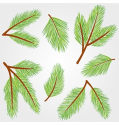 Spruce twigs vector image