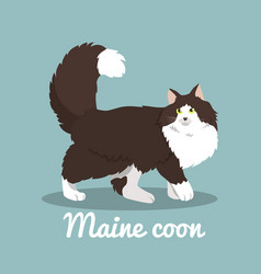 maine coon cute cat on sky blue background vector image vector image