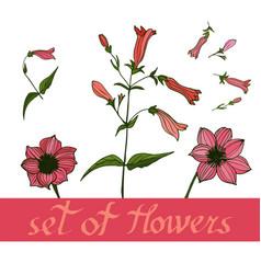beautiful set of flowers vector image
