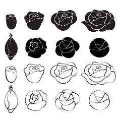 Black rose and white rose vector