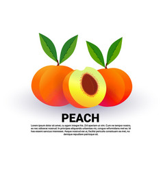 peach on white background healthy lifestyle or vector image