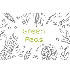 pea hand drawn frame isolated sketch of vector image