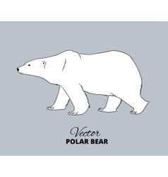 Polar bear hand drawn vector