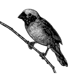 Scratchboard bird vector