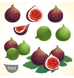 Set of dark and green fig in various style vector image