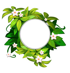 wreath of white flowers on green leaves vector image