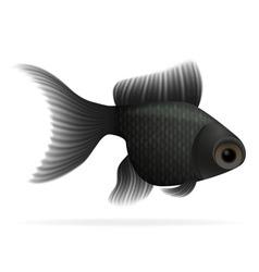 aquarium fish 05 vector image