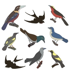 Collection of images of american birds vector image vector image