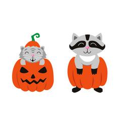 flat cat sitting at pumpkin racoon set vector image
