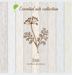 dill essential oil label aromatic plant vector image