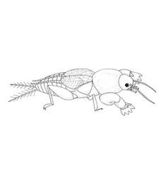 European mole cricket black hand drawing outline vector