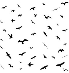 flying birds silhouettes on white background vector image